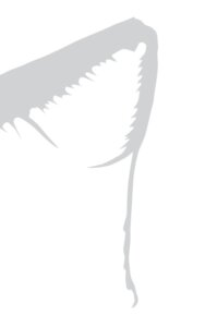 Desenho do livro Selva de Gafanhotos